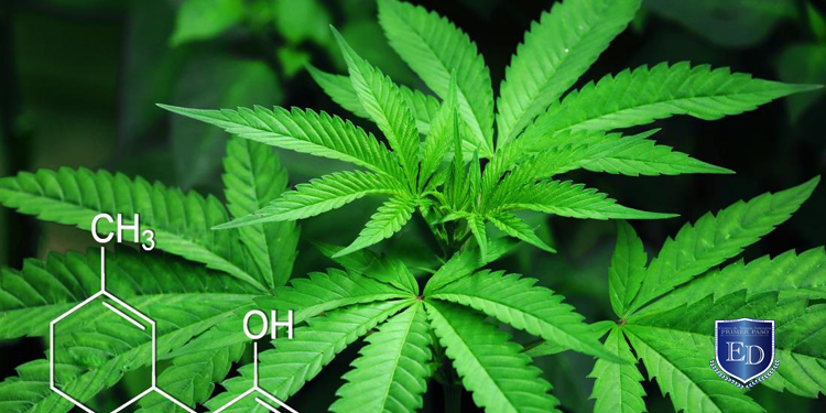 ¿Como es la farmacología de la marihuana?